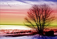 Unusual sunset. Colorful sunset with big tree and a flock of birds Royalty Free Stock Photography