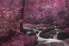 Unusual surreal alternate color forest landscape image Stock Photography