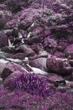 Unusual surreal alternate color forest landscape image Stock Image