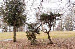 Unusual tree form Royalty Free Stock Photo
