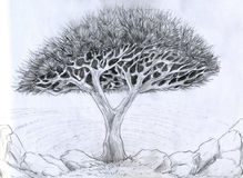 Unusual tree - pencil drawing. Unusual tree with intricately interlacing curved branches. Pencil drawing, sketch Stock Photos
