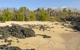 Unusual Vegetation on a Tropical Beach Royalty Free Stock Photos