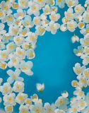 Unusual water flowers. White jasmin flowers in blue water. Used optical star filter royalty free stock photos