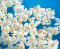 Unusual water flowers. White jasmin flowers in blue water. Used optical star filter royalty free stock images