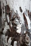 Unusual wooden tree bark in brown and white. Unusual wooden tree bark with interesting pattern stock images