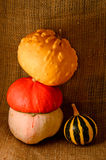 Unusual yellow pumpkin, orange hat pumpkin  and small watermelon Stock Image