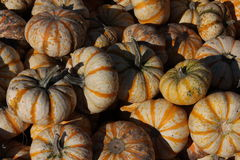 Unusually Colored Pumpkins. I found this group of pumpkins or gourds at an outdoor fall festival. I liked the colors, light, and shadow created by the bright Royalty Free Stock Photo