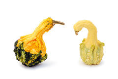 Unusually shaped autumn squashes Stock Photo