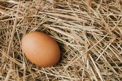 unverarbeitetes Legen des braunen Eies auf Stroh Lizenzfreie Stockfotos