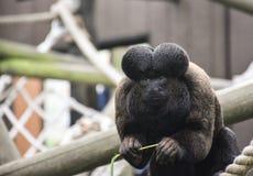 Unverschämter Affe Stockfotografie