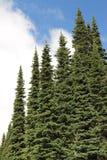 Unverwüstliche Bäume Stockbilder