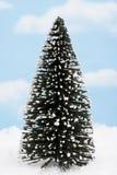 Unverwüstlicher Baum Lizenzfreies Stockfoto