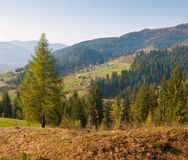 Unverwüstlicher Baum in den Bergen Stockbilder