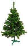 Unverwüstlicher Weihnachtsbaum undecorated Lizenzfreie Stockfotografie