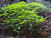 Unwanted Flora on The  Ground. The Green Leaves Unwanted Flora on The  Ground Royalty Free Stock Image