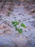 Unwanted Flora on The Soil Royalty Free Stock Images