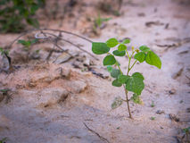 Unwanted Flora on The Soil. Unwanted Flora Ivy on The Ground Stock Photo