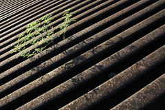 Unwanted flora. Weed or unwanted flora growth on the ground of train station Stock Photo