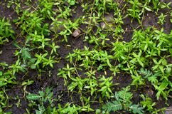 Unwanted plant on the ground. With natural lighting Royalty Free Stock Images