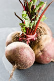 Unwashed fresh beetroot Stock Images