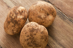 Unwashed fresh farm potatoes Stock Image