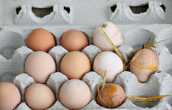 Unwashed fresh organic eggs. Organic brown eggs fresh from the hens before being washed Royalty Free Stock Photos
