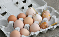 Unwashed fresh organic eggs. Organic brown eggs fresh from the hens before being washed Stock Photos