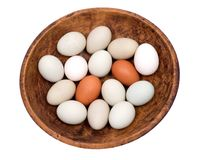 Unwashed fresh organic gmo and soy free pasture raised chicken eggs warm cozy winter gloves Stock Image