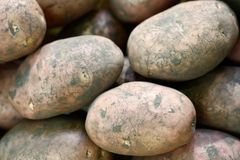 Unwashed new eco potatoes for sale on the local farmers market, close up Royalty Free Stock Image