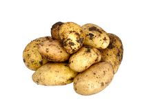Unwashed potato on a white Stock Image