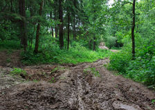 Unwegsamer Waldweg des Schlammes und des Lehms Stockfotos