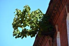 Unwelcome träd arkivfoton