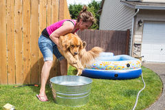 Unwilling dog bath Royalty Free Stock Image