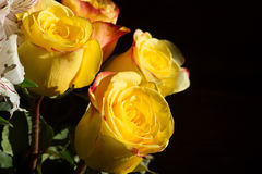 Unwrapped yellow rose on the black background Royalty Free Stock Photos
