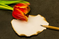 Unwritten message. Piece of paper with no message with a tulip and a pen lying on the side Stock Images