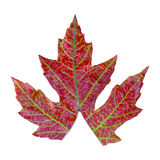 Unzipping a leaf Royalty Free Stock Photo
