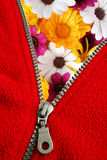 Unzipping spring. Zipper opening to show colorful spring daisies royalty free stock photography