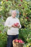 Uomini anziani con le mele rosse in frutteto fotografia stock