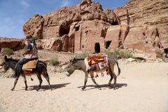 Uomini beduini sui muli nel PETRA, Giordania Immagine Stock Libera da Diritti