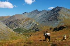 Uomini, cavallo e montagne Immagini Stock Libere da Diritti