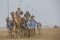 Uomini che guidano i cammelli in un deserto fotografia stock libera da diritti