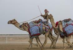 Uomini che guidano i cammelli in un deserto immagine stock libera da diritti