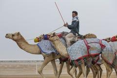 Uomini che guidano i cammelli in un deserto immagine stock