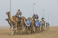 Uomini che guidano i cammelli in un deserto fotografia stock