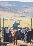 Uomo ad un rodeo Fotografia Stock