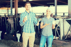 Uomo allegro e donna che stanno con nel capannone e lo showi della mucca Fotografia Stock