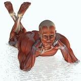 Uomo anatomicamente muscolare in acqua Fotografia Stock Libera da Diritti