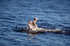 Uomo anziano all'annegamento del mare dovuto segnare ed a chiedere l'aiuto con la palma verso l'alto fotografia stock libera da diritti