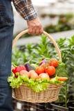 Uomo anziano con alimento sano in serra Fotografie Stock