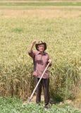 Uomo anziano nel campo dell'orzo Immagini Stock Libere da Diritti